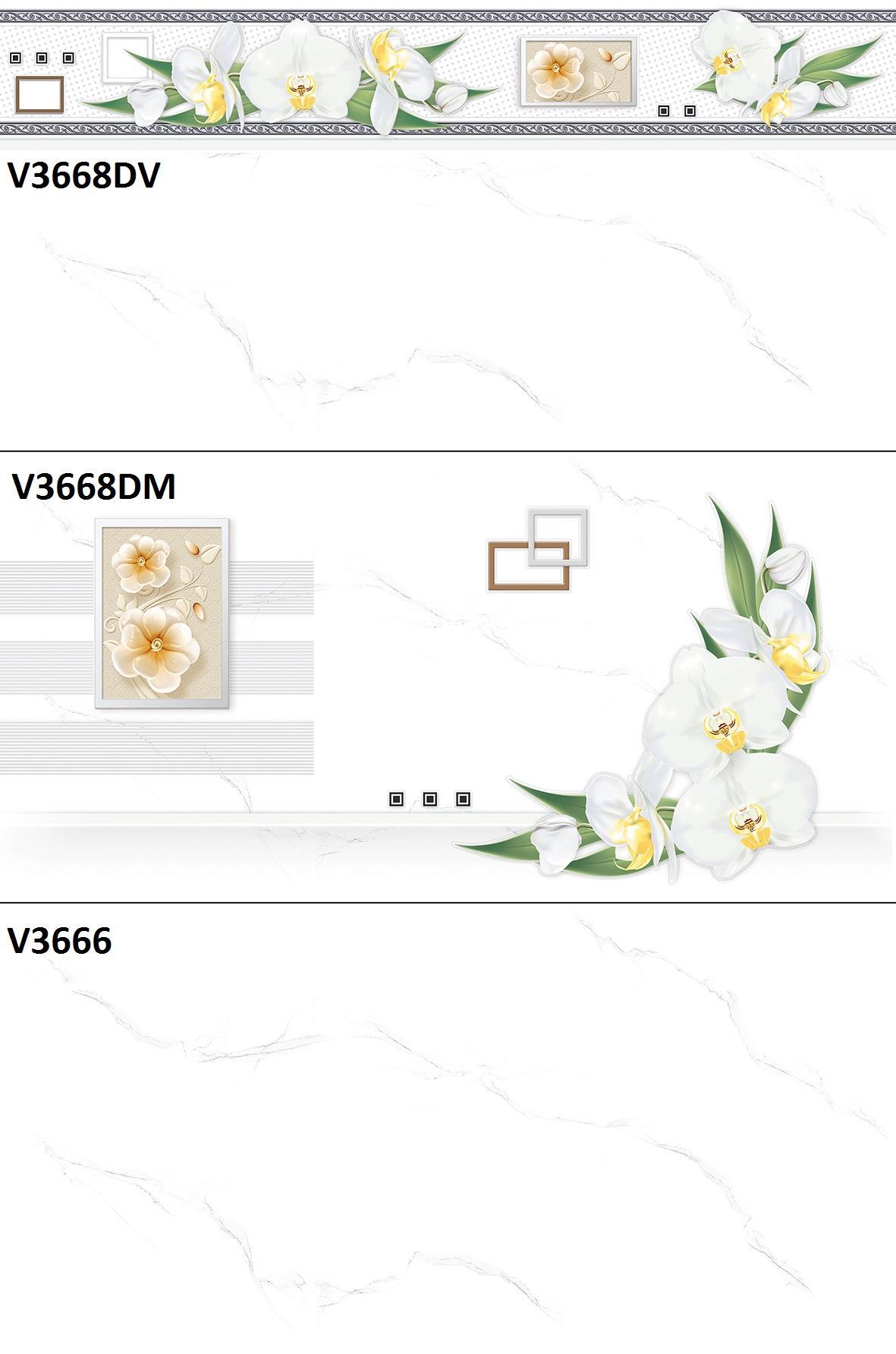 V3668