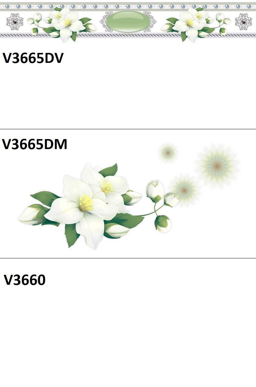 V3665