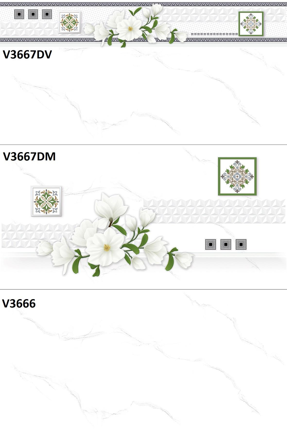 V3667